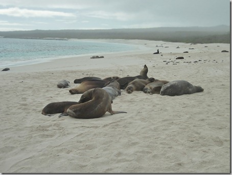 2012-12-17 Galapagos Day 1 morning water camera 024