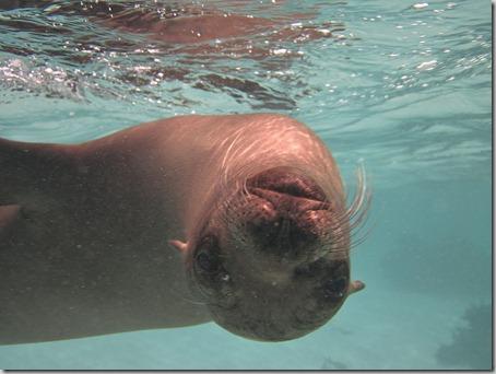 2012-12-17 Galapagos Day 1 morning water camera 090